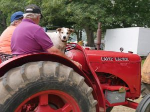 Tractor&dog-800x600